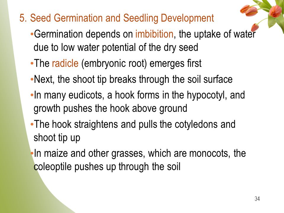 5. Seed Germination and Seedling Development
