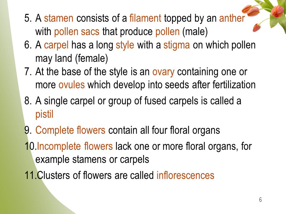 A stamen consists of a filament topped by an anther with pollen sacs that produce pollen (male)