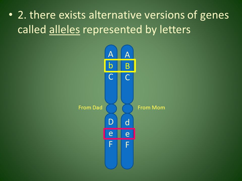 2. there exists alternative versions of genes called alleles represented by letters