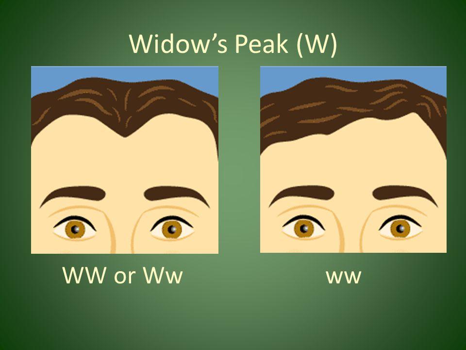 Widow's Peak (W) WW or Ww ww