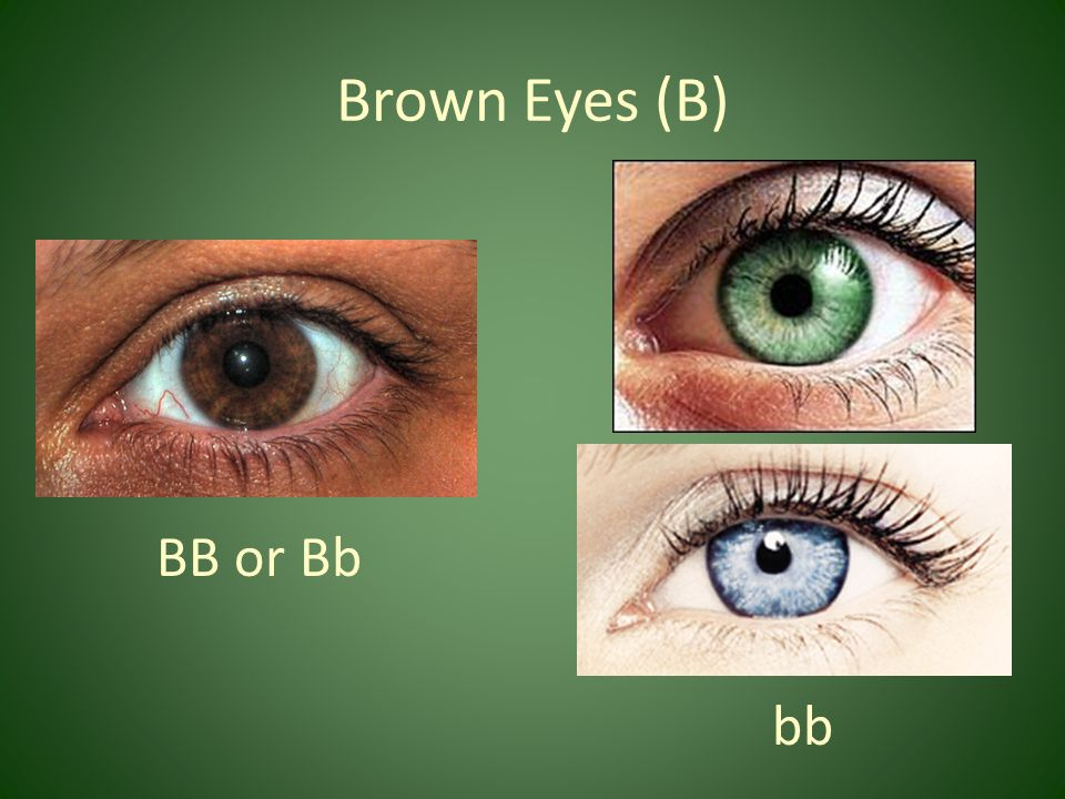 Brown Eyes (B) BB or Bb bb