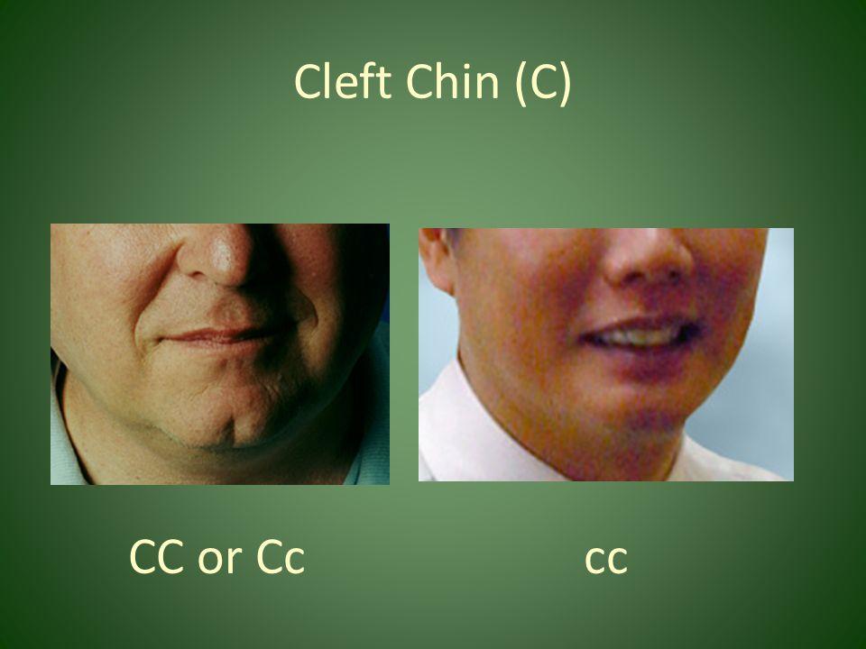 Cleft Chin (C) CC or Cc cc