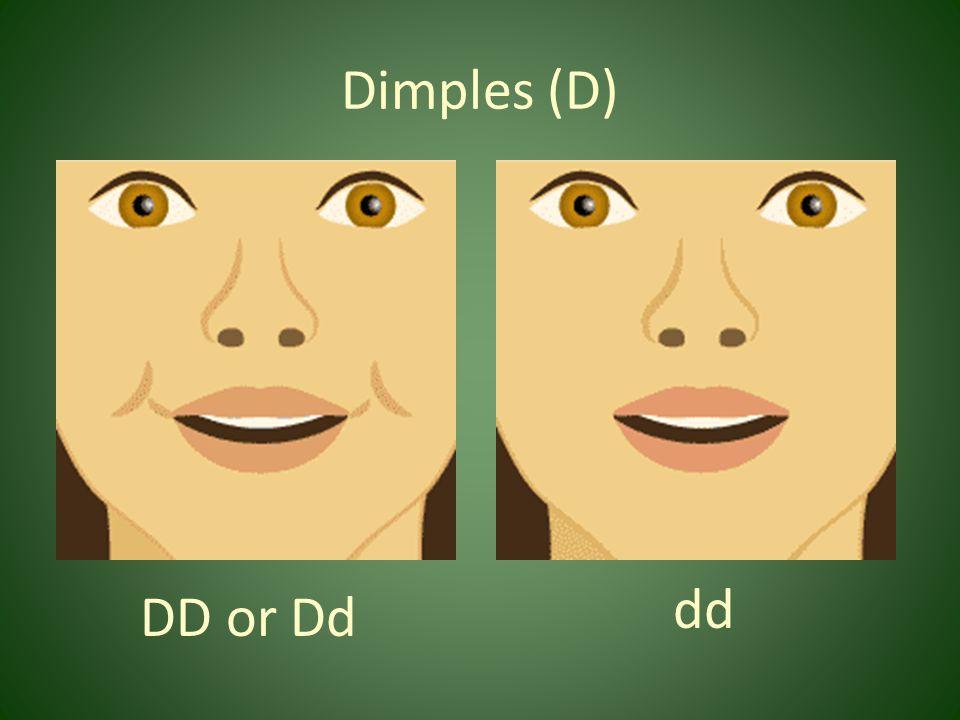 Dimples (D) dd DD or Dd