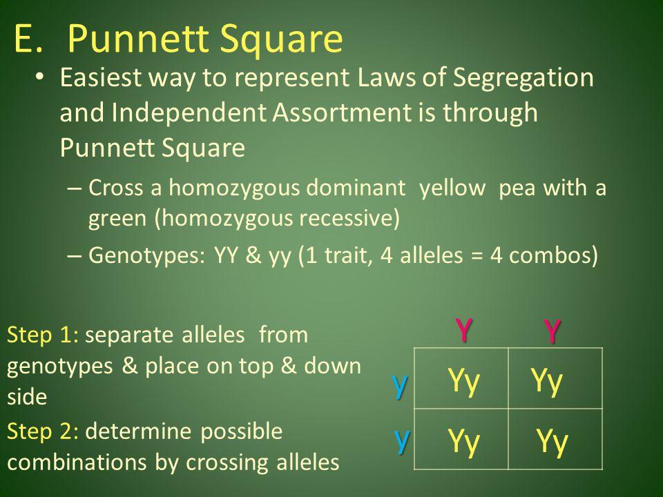 Punnett Square Y Y y Yy Yy y Yy Yy