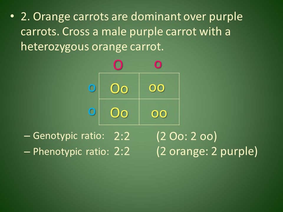 2. Orange carrots are dominant over purple carrots