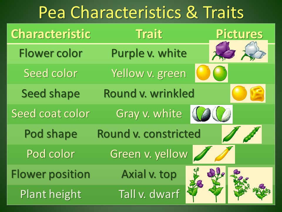 Pea Characteristics & Traits
