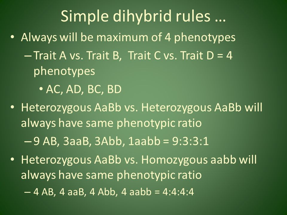 Simple dihybrid rules …