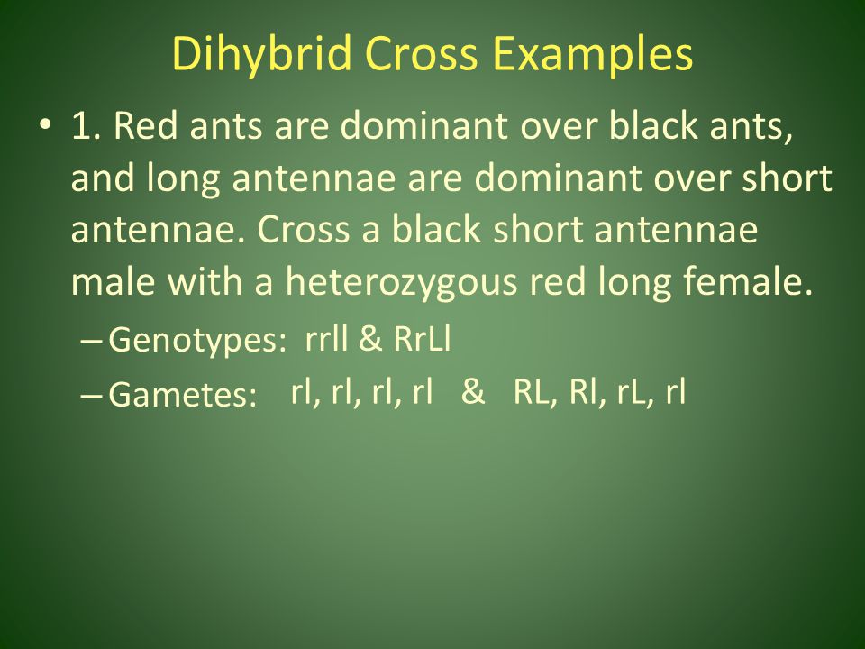 Dihybrid Cross Examples