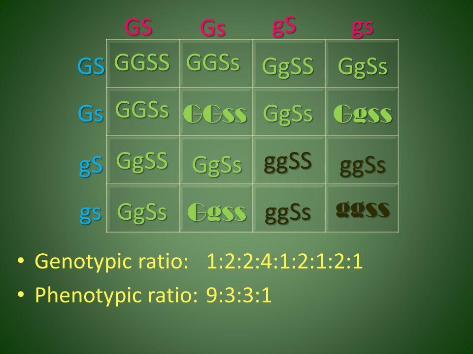 GS Gs gS gs GGSS GGSs GS GgSS GgSs GGSs Gs GGss GgSs Ggss GgSS ggSS gS