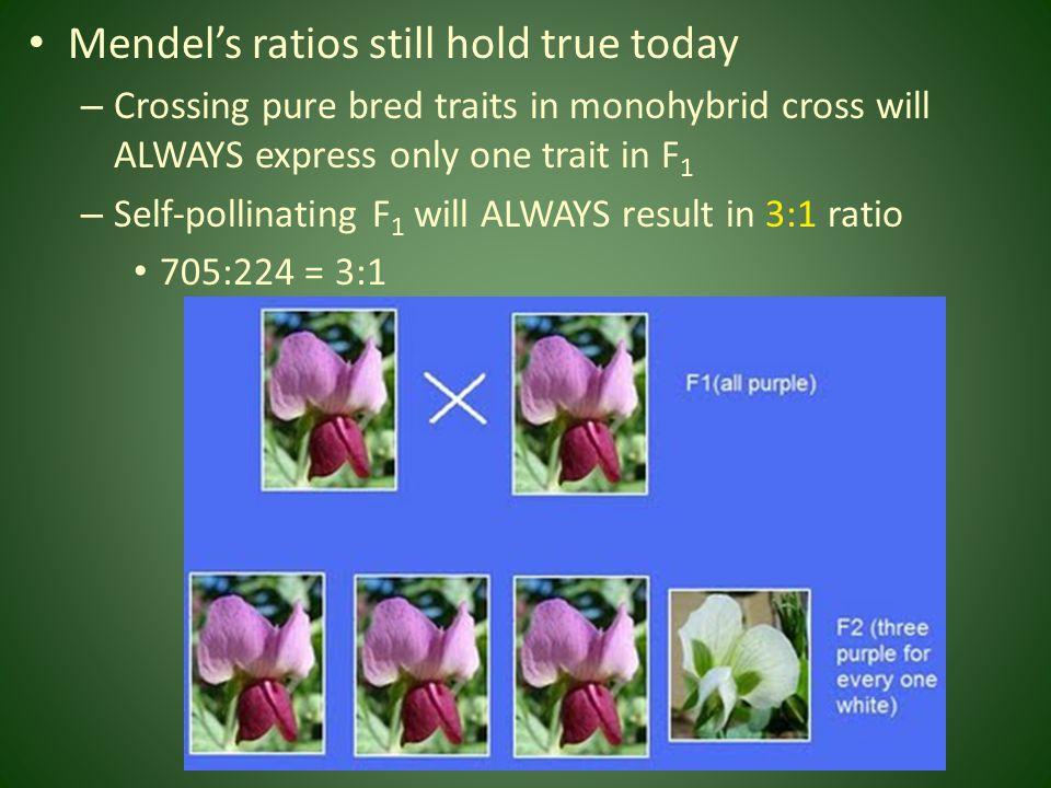 Mendel's ratios still hold true today