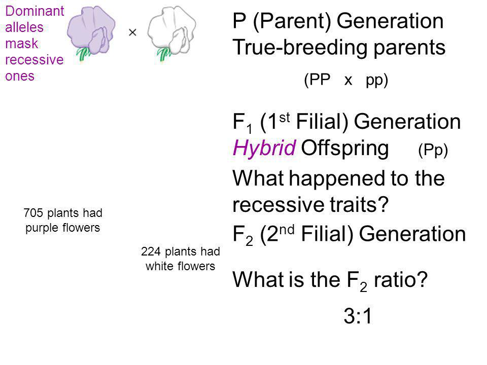 P (Parent) Generation True-breeding parents