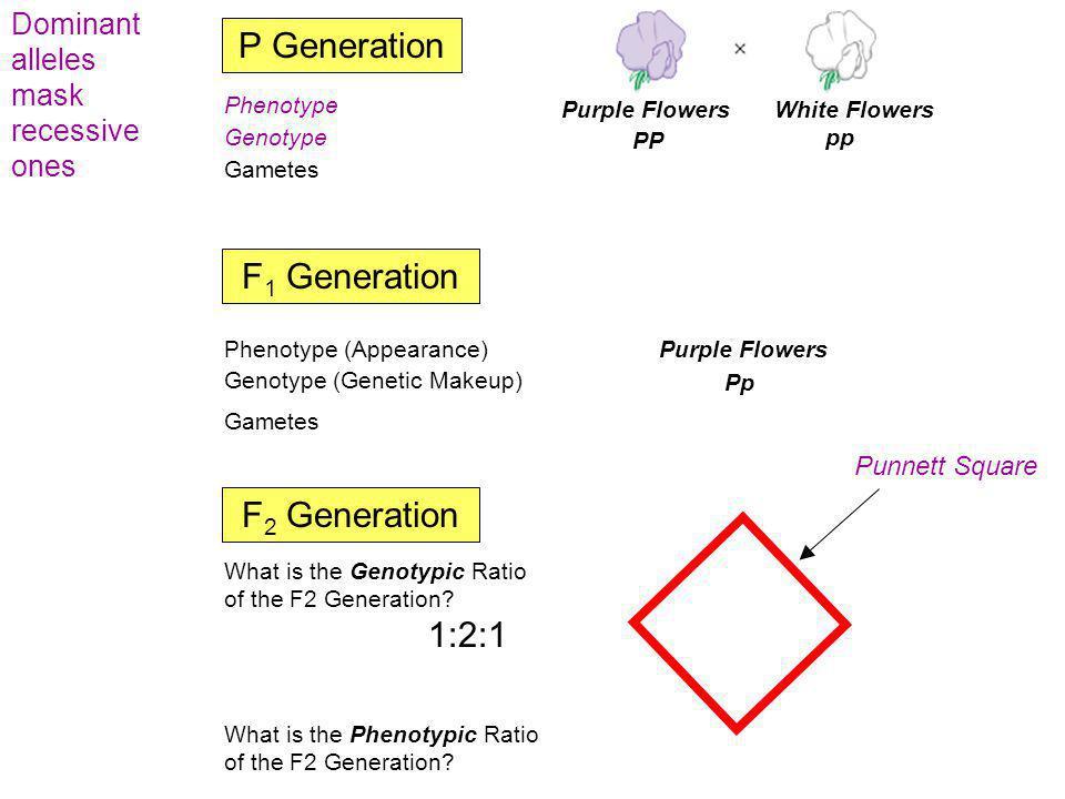 P Generation F1 Generation F2 Generation PP:Pp:pp  1:2:1 3: 1
