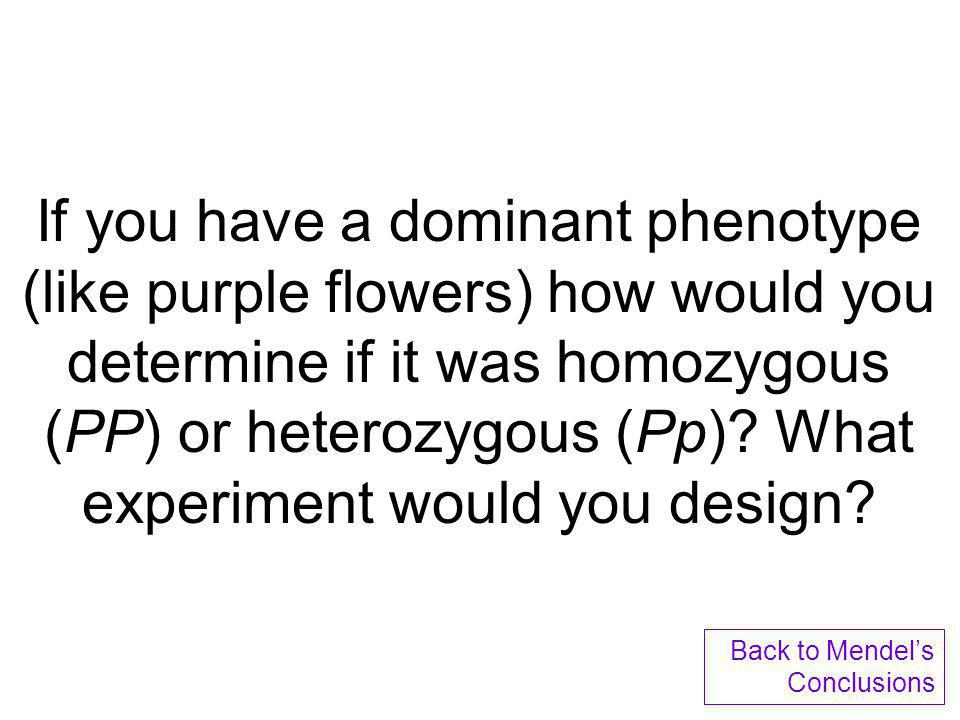 If you have a dominant phenotype (like purple flowers) how would you determine if it was homozygous (PP) or heterozygous (Pp) What experiment would you design
