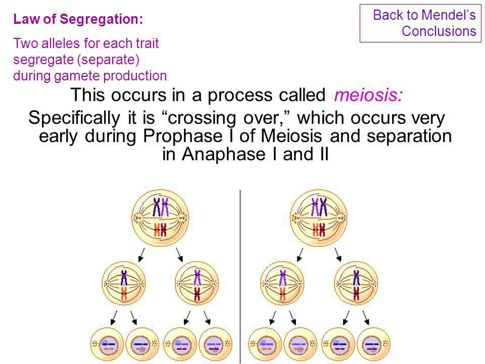 This occurs in a process called meiosis: