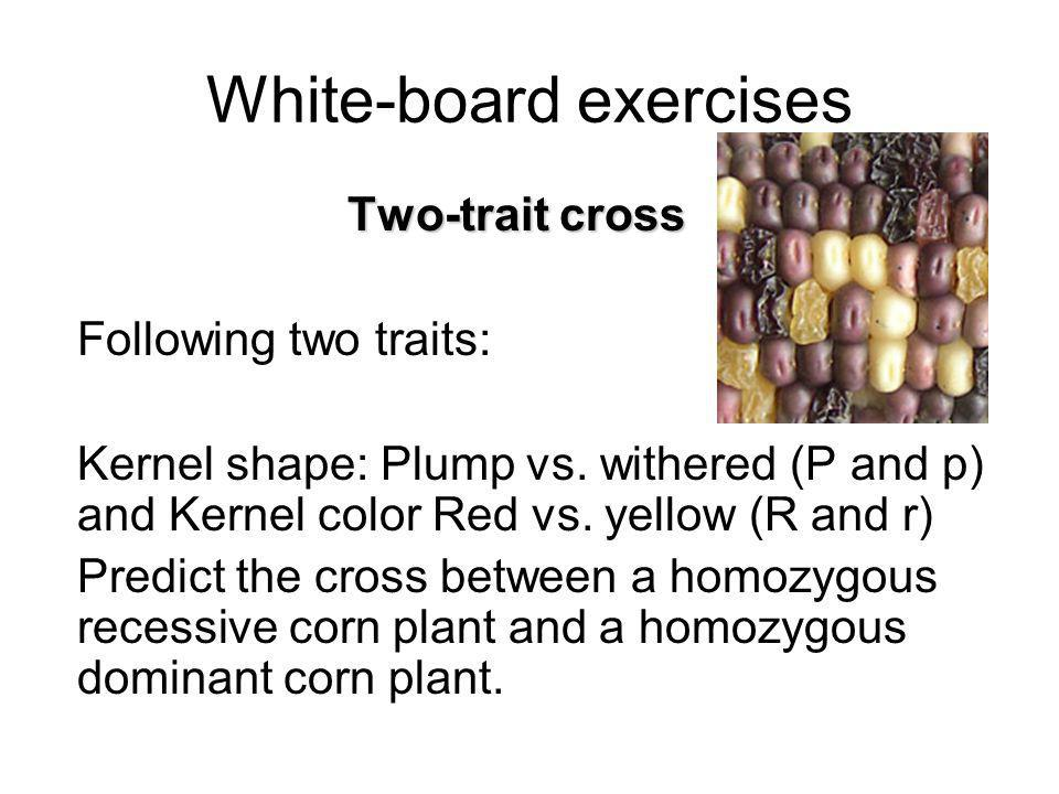 White-board exercises