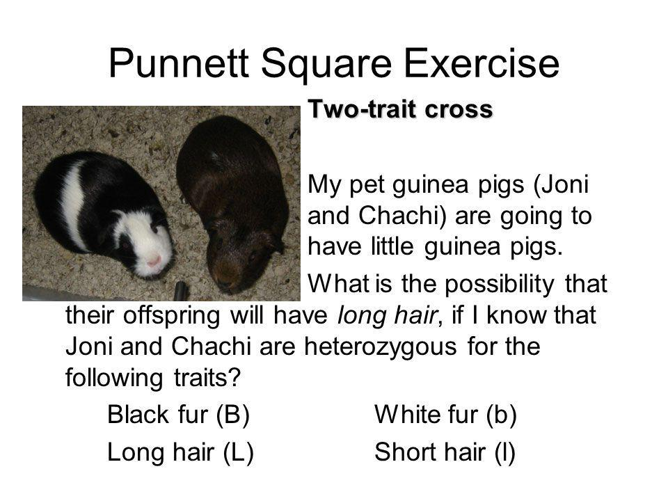 Punnett Square Exercise