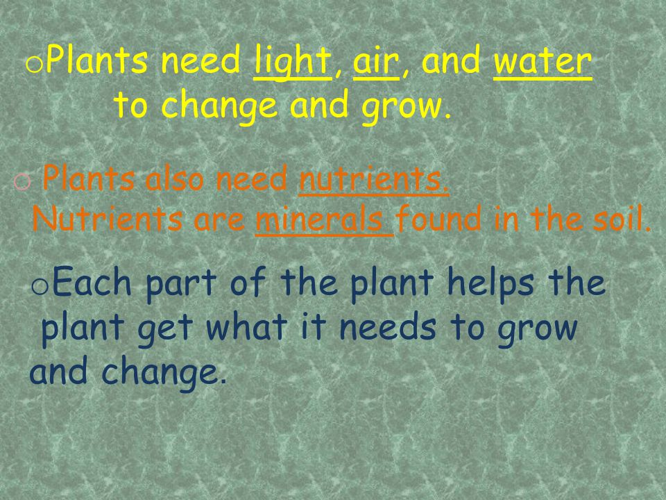 Plants need light, air, and water to change and grow.