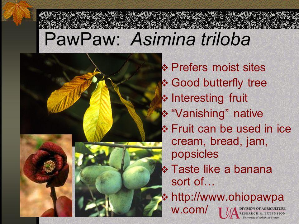 PawPaw: Asimina triloba