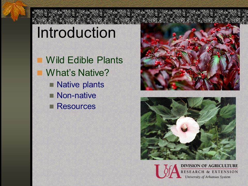 Introduction Wild Edible Plants What's Native Native plants