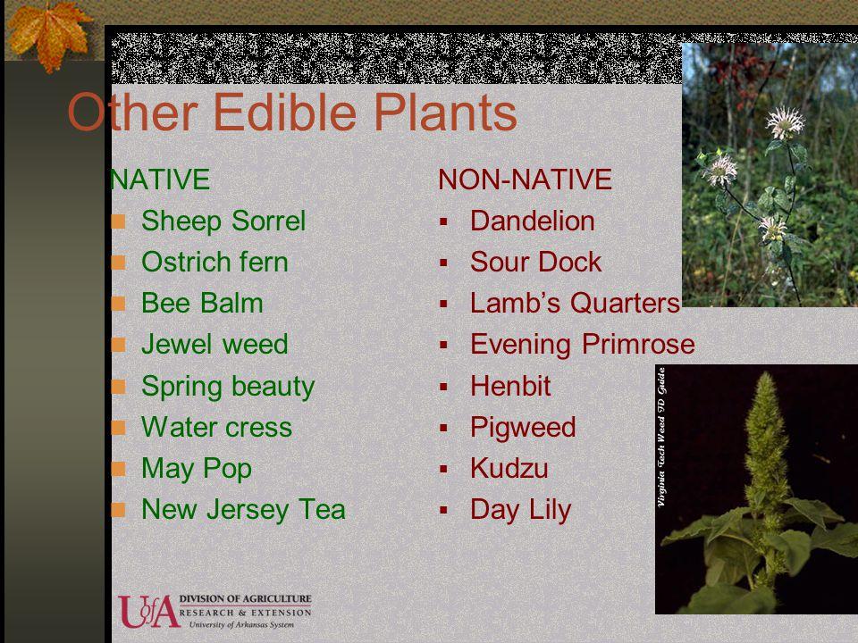Other Edible Plants NATIVE Sheep Sorrel Ostrich fern Bee Balm
