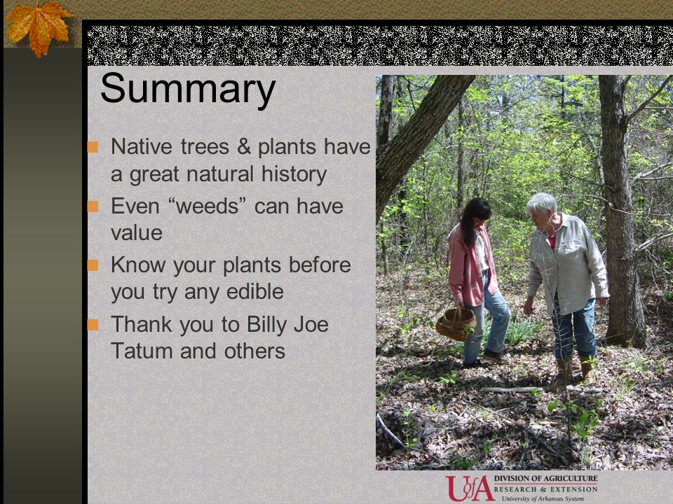 Summary Native trees & plants have a great natural history