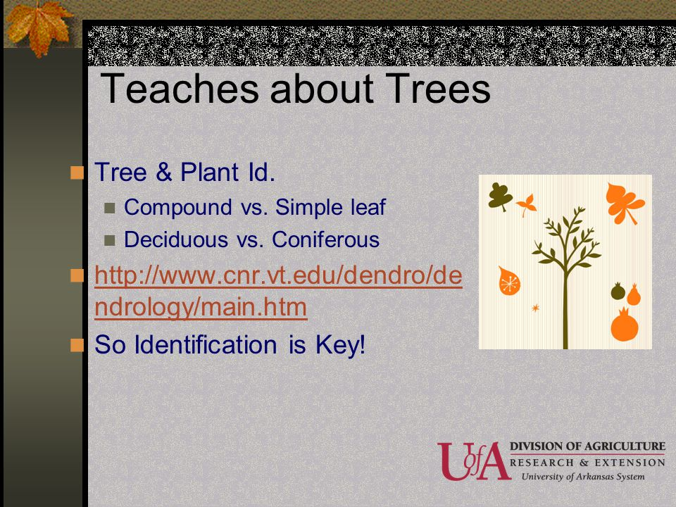 Teaches about Trees Tree & Plant Id.