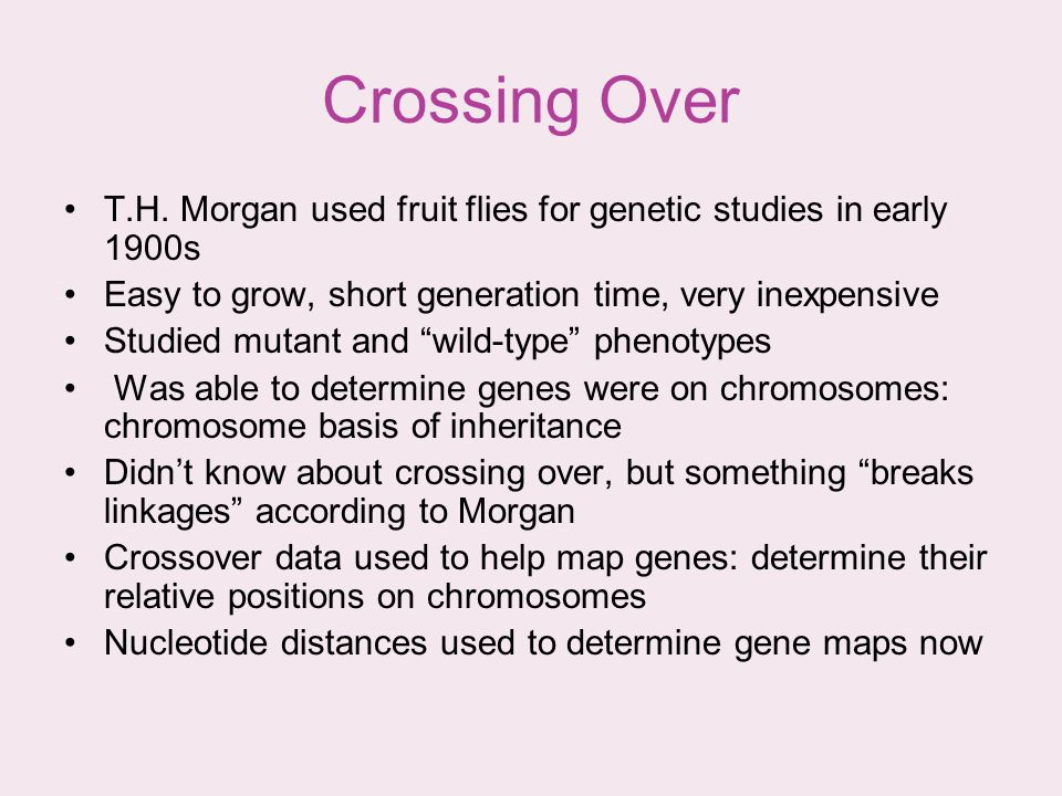 Crossing Over T.H. Morgan used fruit flies for genetic studies in early 1900s. Easy to grow, short generation time, very inexpensive.