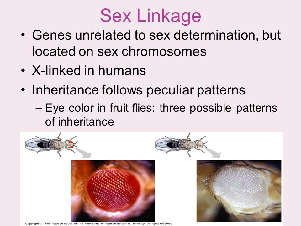 Sex Linkage Genes unrelated to sex determination, but located on sex chromosomes. X-linked in humans.