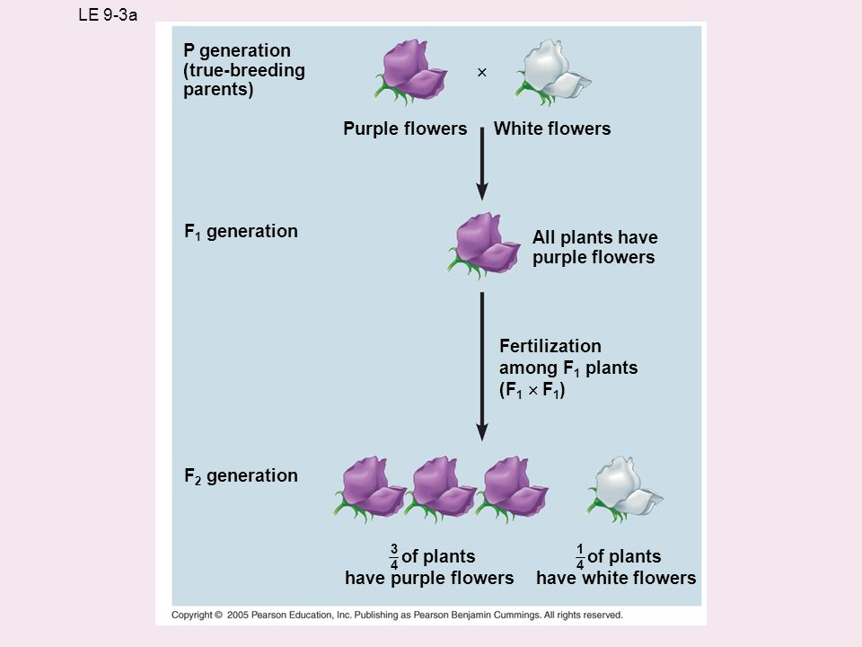 have purple flowers have white flowers
