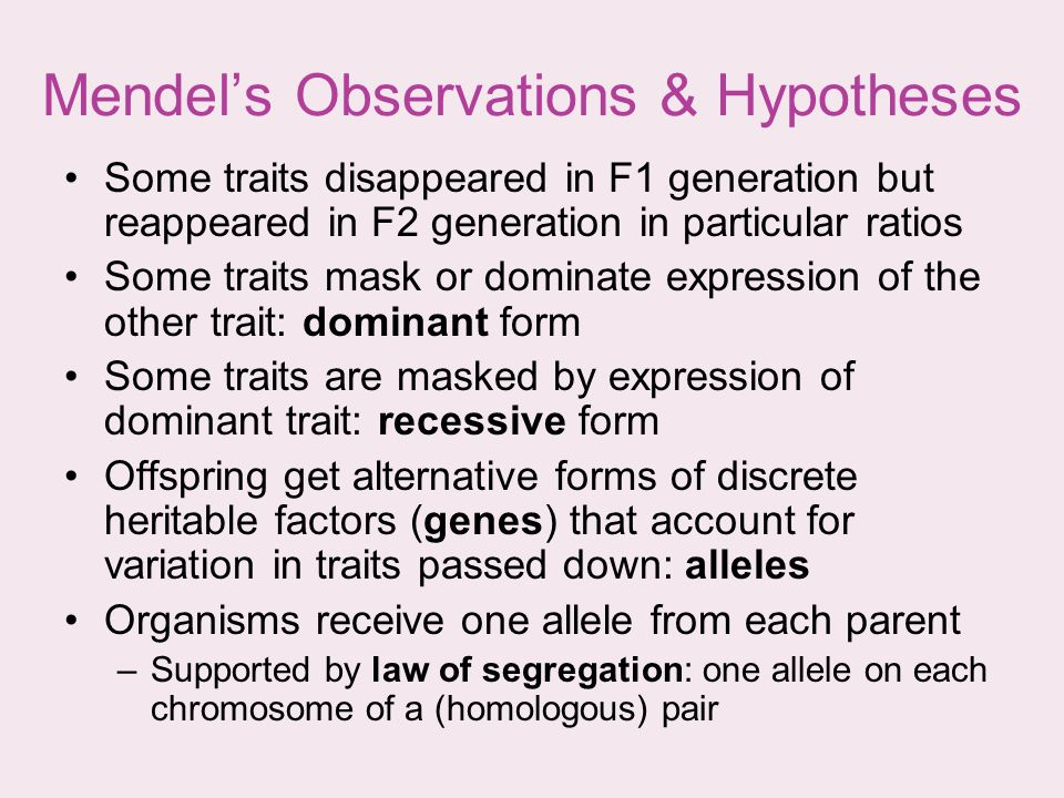 Mendel's Observations & Hypotheses
