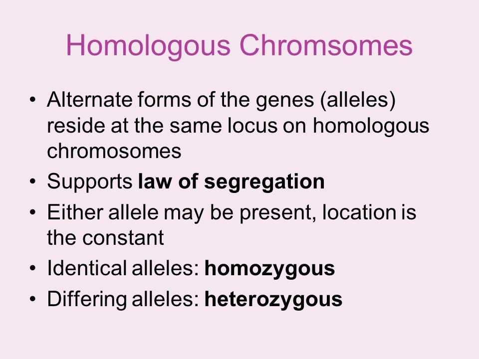 Homologous Chromsomes
