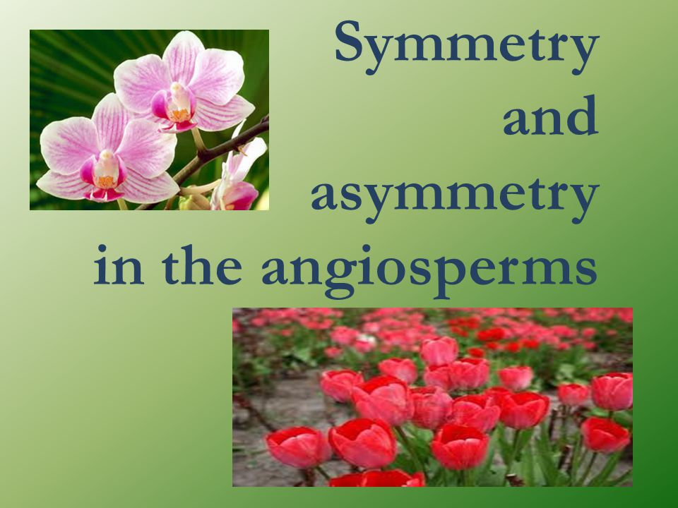 Symmetry and asymmetry in the angiosperms