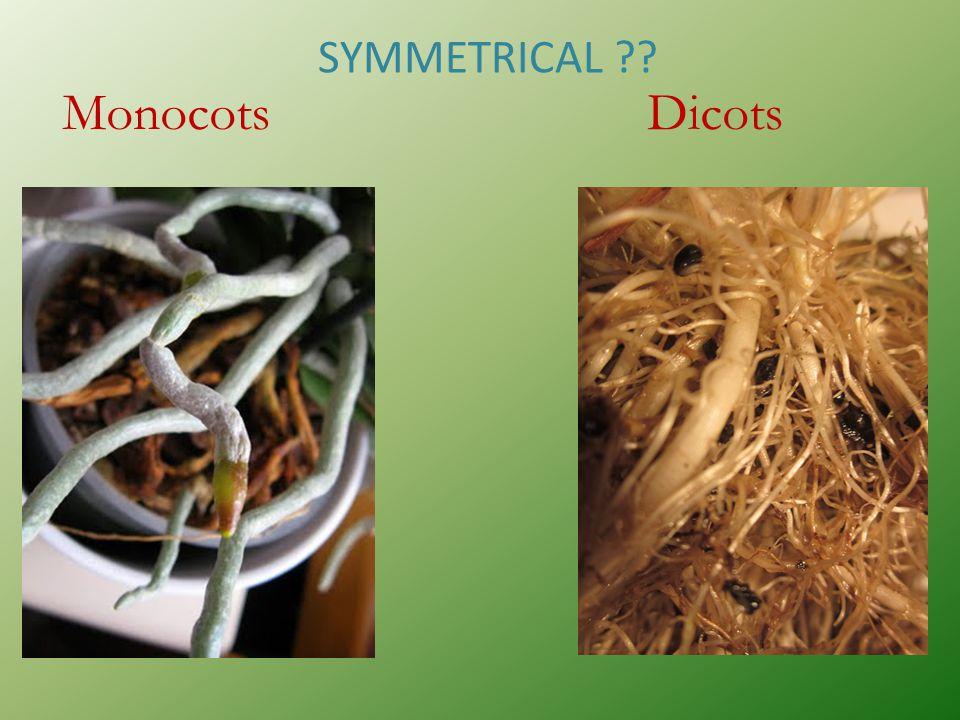 SYMMETRICAL Monocots Dicots