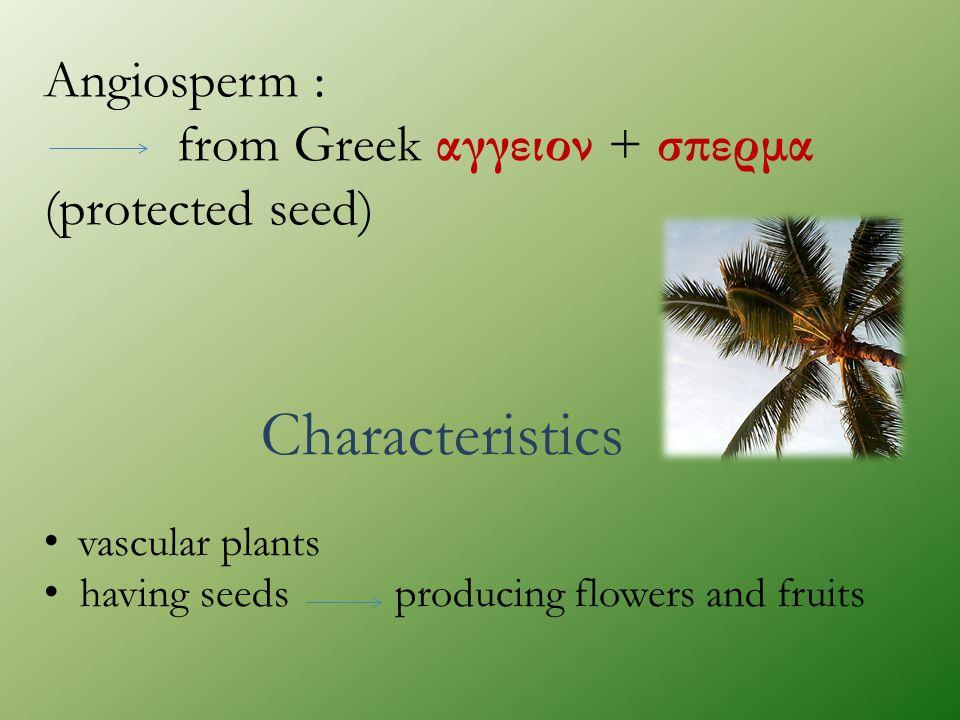 Characteristics Angiosperm :