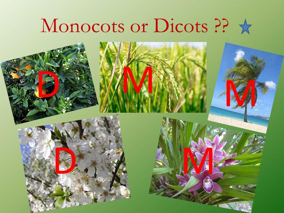 Monocots or Dicots M D M D M