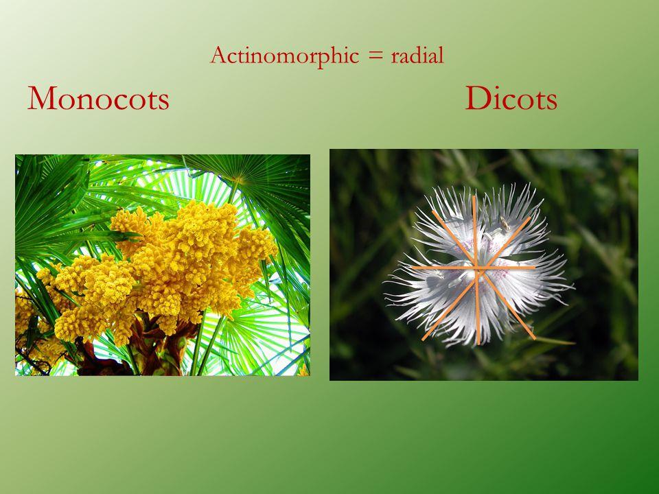 Actinomorphic = radial