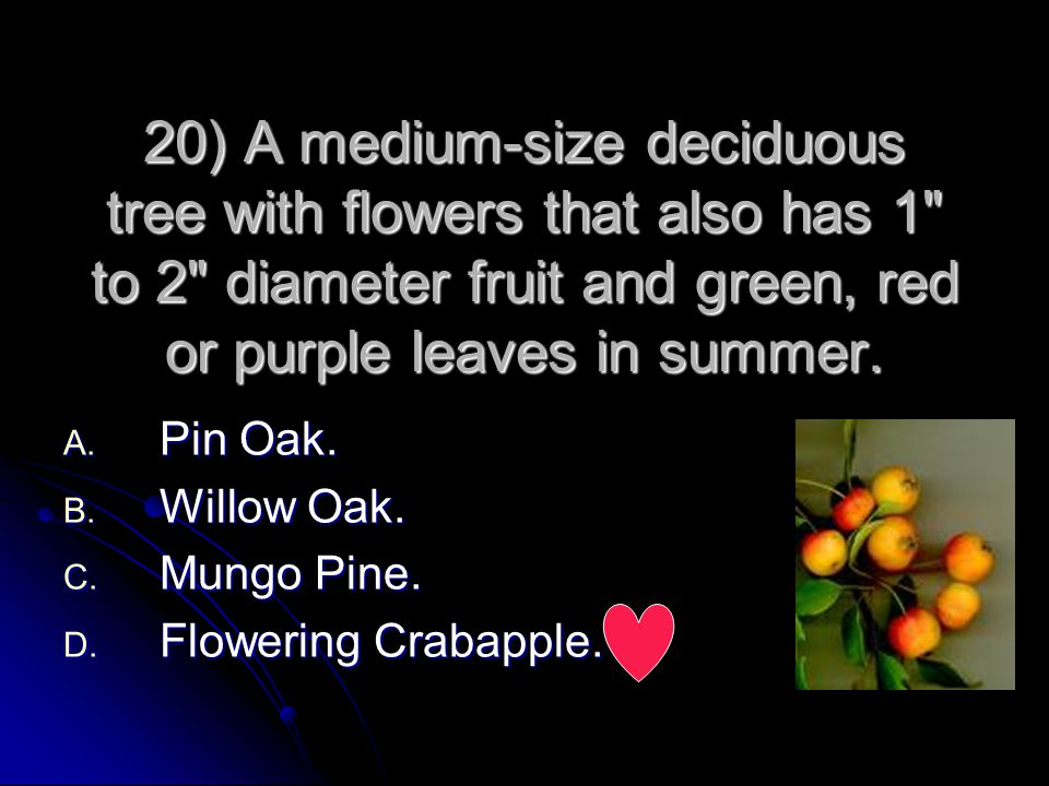 20) A medium-size deciduous tree with flowers that also has 1 to 2 diameter fruit and green, red or purple leaves in summer.