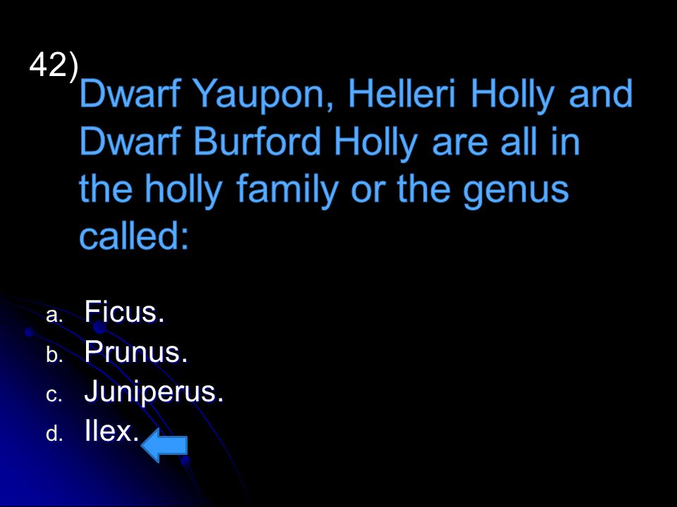 Dwarf Yaupon, Helleri Holly and Dwarf Burford Holly are all in the holly family or the genus called:
