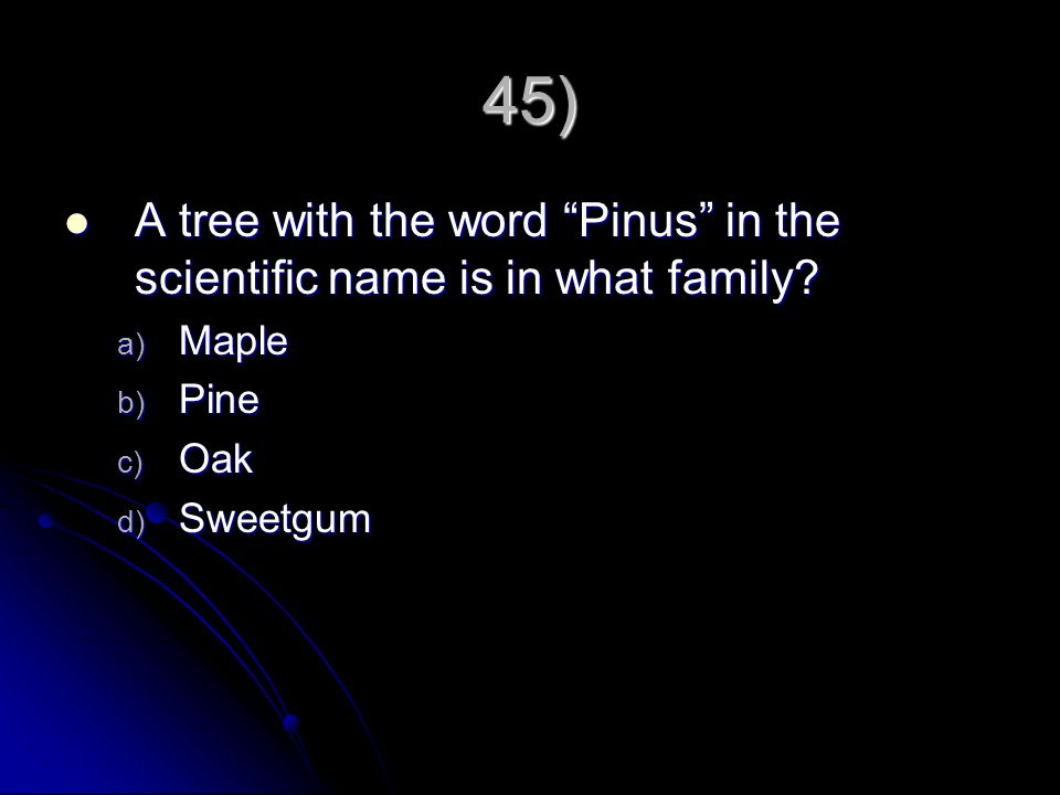 45) A tree with the word Pinus in the scientific name is in what family Maple Pine Oak Sweetgum