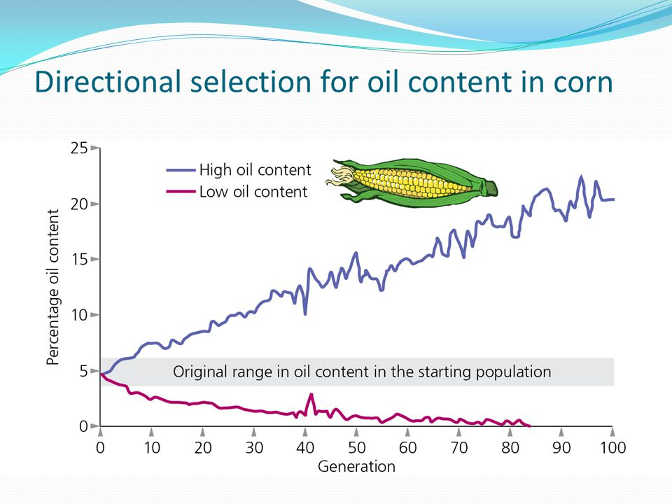 Directional selection for oil content in corn
