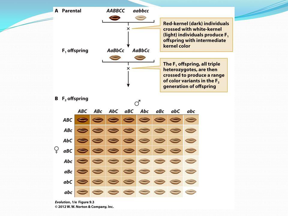 Figure 9.3 Multifactorial inheritance generates near-continuous variation.
