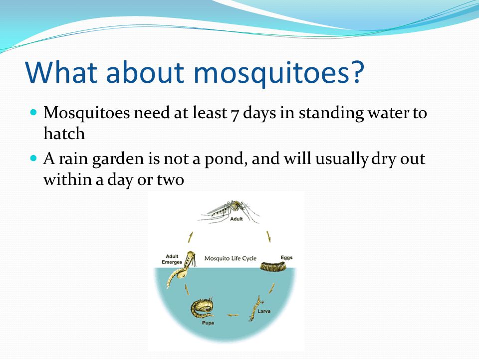 What about mosquitoes Mosquitoes need at least 7 days in standing water to hatch.