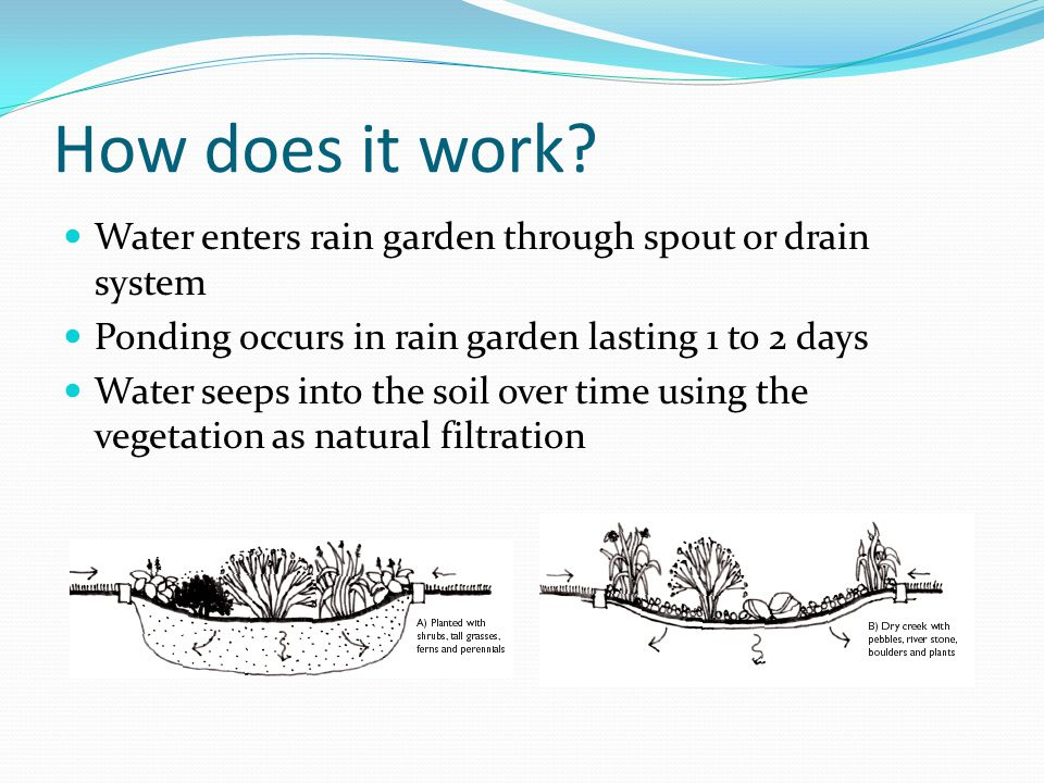 How does it work Water enters rain garden through spout or drain system. Ponding occurs in rain garden lasting 1 to 2 days.