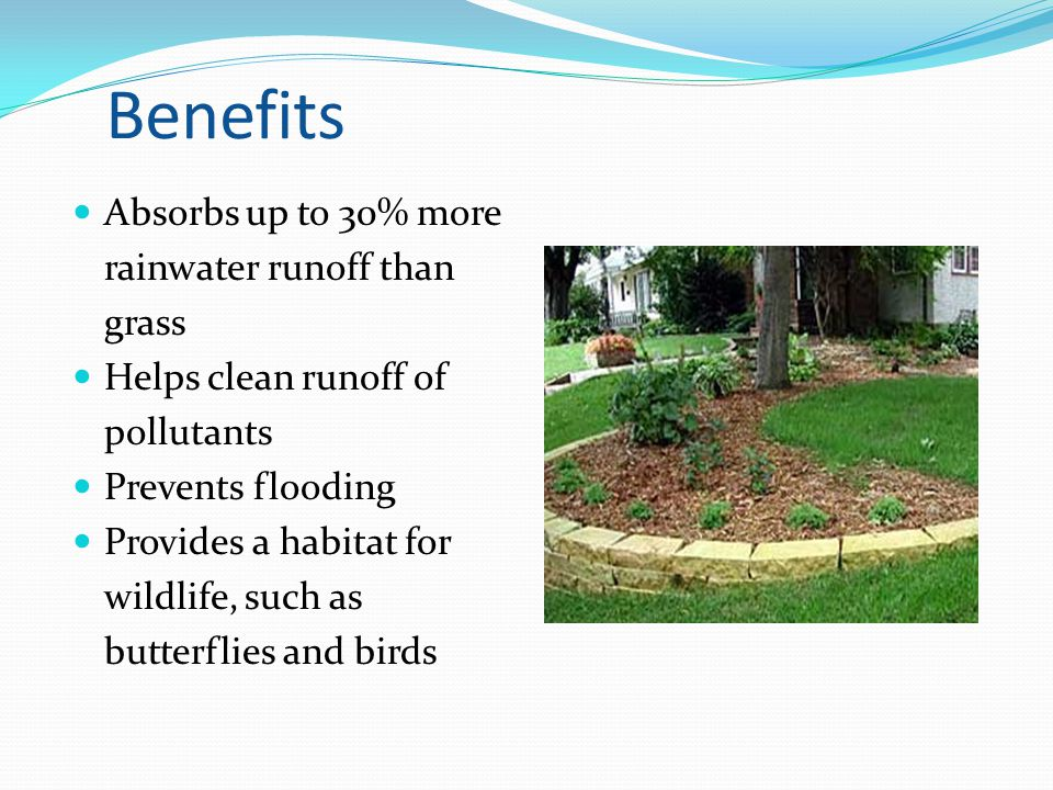 Benefits Absorbs up to 30% more rainwater runoff than grass