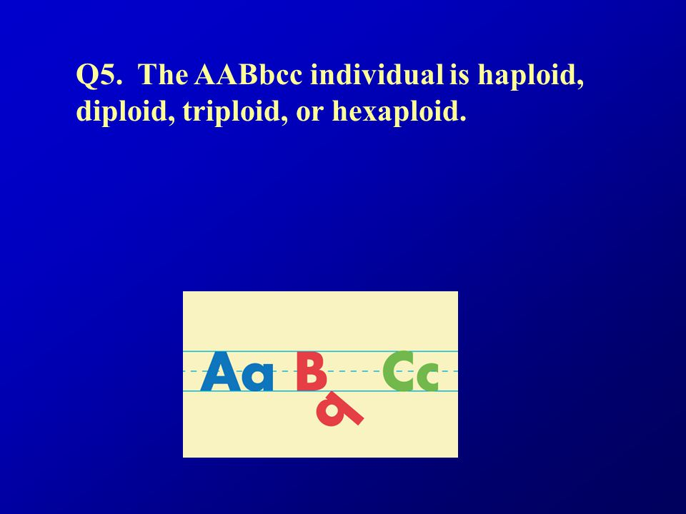 Q5. The AABbcc individual is haploid, diploid, triploid, or hexaploid.