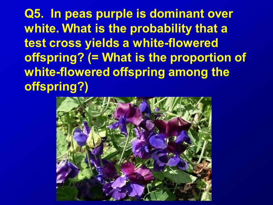 Q5. In peas purple is dominant over white