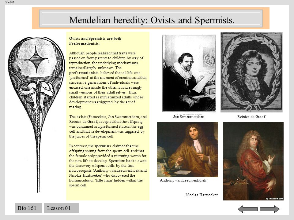 Mendelian heredity: Ovists and Spermists.