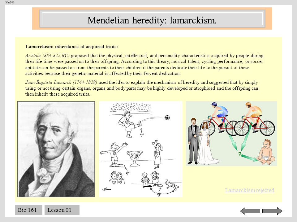 Mendelian heredity: lamarckism.