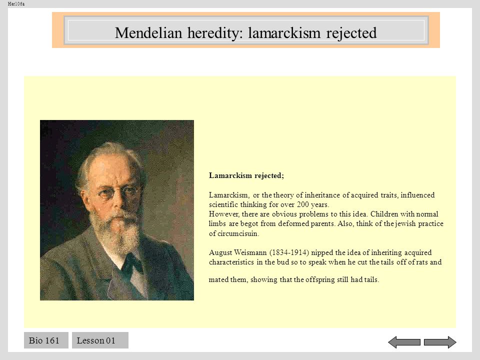 Mendelian heredity: lamarckism rejected