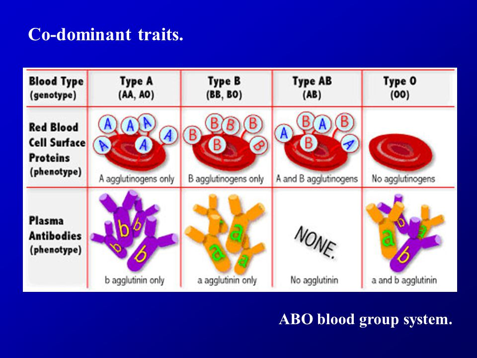 Co-dominant traits. ABO blood group system.